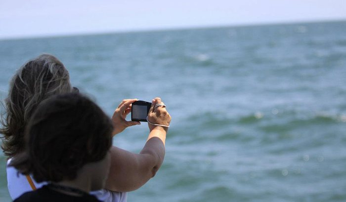 Atlantic City Dolphin Watching Cruise