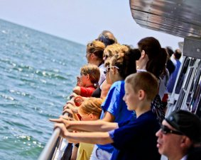 Atlantic City Dolphin Watching Cruise