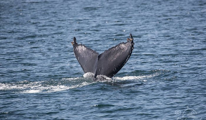 Newport Bay Whale Watching Cruise