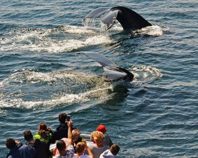 Boston Whale Watching Excursion