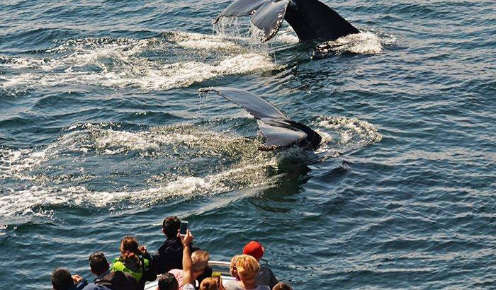 Boston Whale Watching Excursion