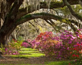 Sightseeing Tour of Charleston