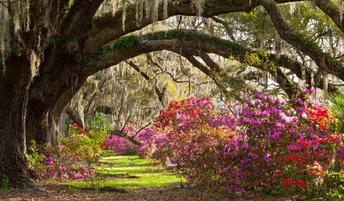 Sightseeing Tour of Charleston