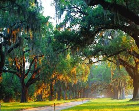 Charleston Sightseeing Tour