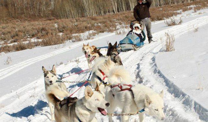 Park City Dog Sledding Tour