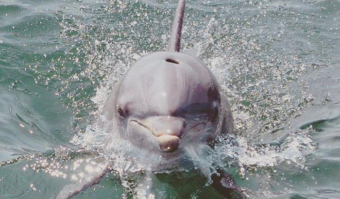 Hilton Head Dolphin Watching Cruise