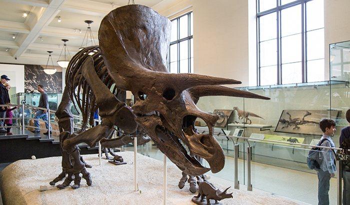 New York Museum Art Safari