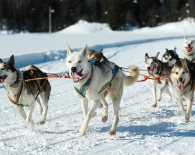 Hilltown Winter Dog Sled Tour