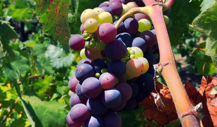 Napa Valley Winery Tour