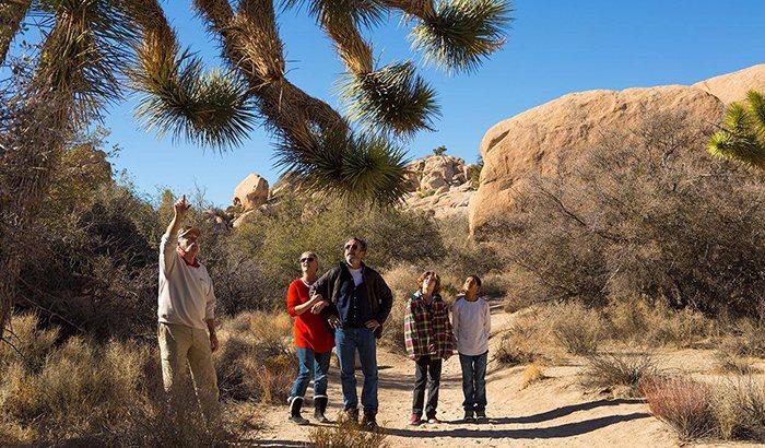 Joshua Tree National Park Tour