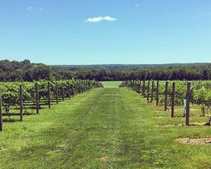 North Fork Long Island Winery Bicycle Tour