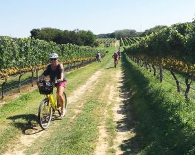 Long Island Winery Bicycle Tour