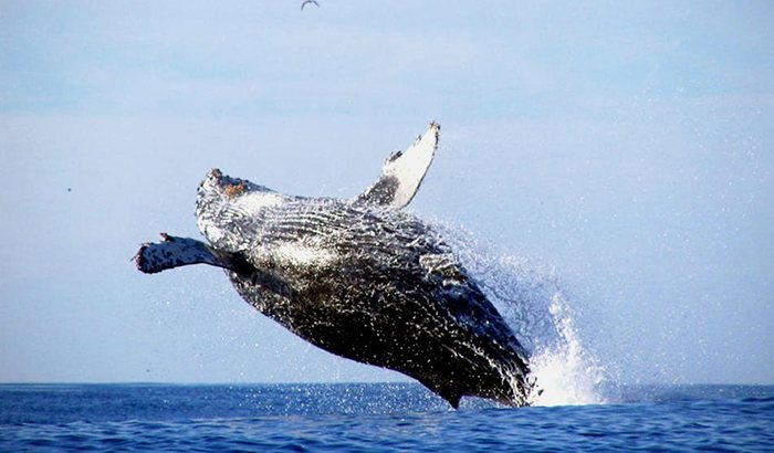 Whale Watching in Monterey