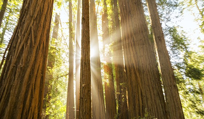 Muir Woods and Sonoma Winery Tour