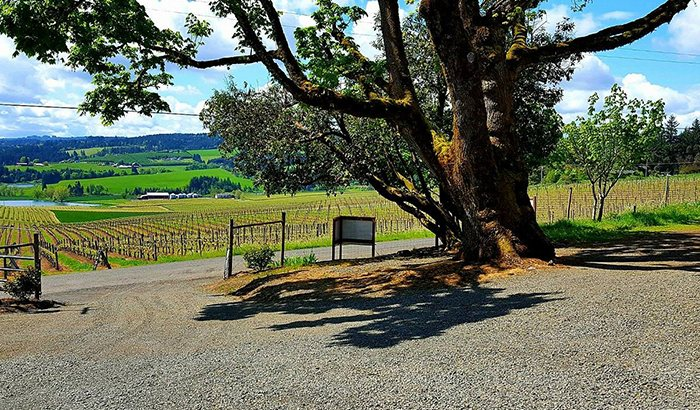 Willamette Valley Wine Tour