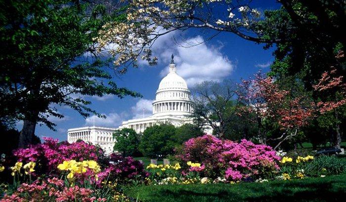 Photo Safari of Washington D.C.