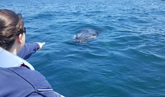 Whale and Dolphin Watching R.I.B. Ride