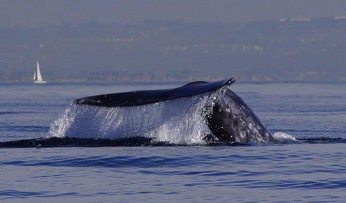 San Diego Schooner Whale Watching