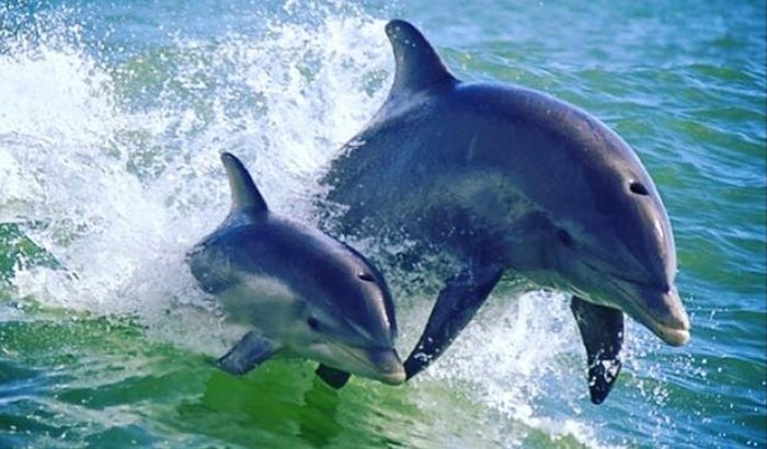 Speedboat Dolphin Adventure