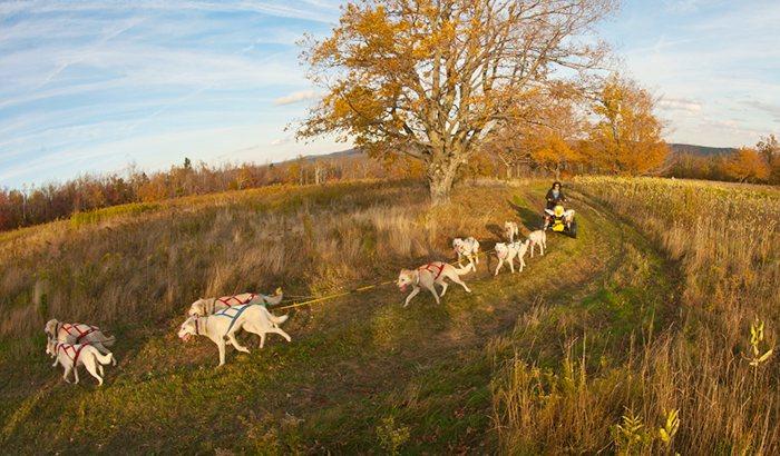 Hilltown Dry Land Dog Sled Tour
