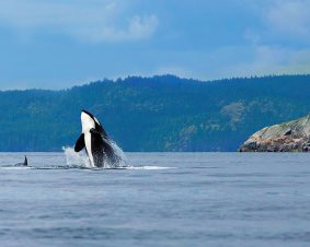 San Juan Islands Whale Watching Cruise