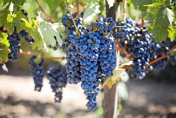 Wine Class In Temecula