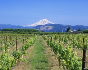 Wine Tasting in Woodinville