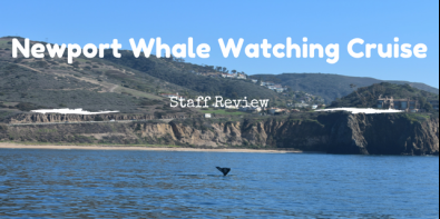 Thar She Blows! Staff Review: Newport Whale Watching Cruise